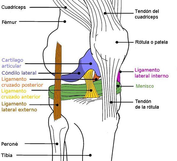 Traumatólogo experto en rotura de menisco y del ligamento cruzado